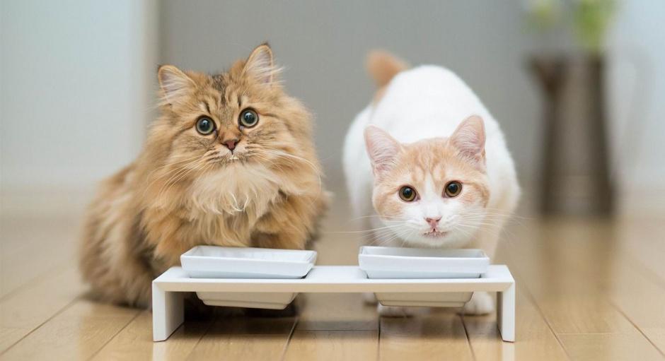 MERADOG: Корма супер премиум класса для собак и кошек